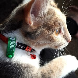 75mm WrapStrap® - Green Cat Tag